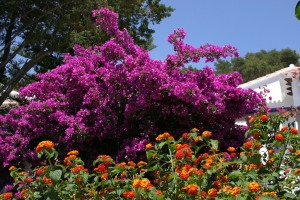Floral Contrast