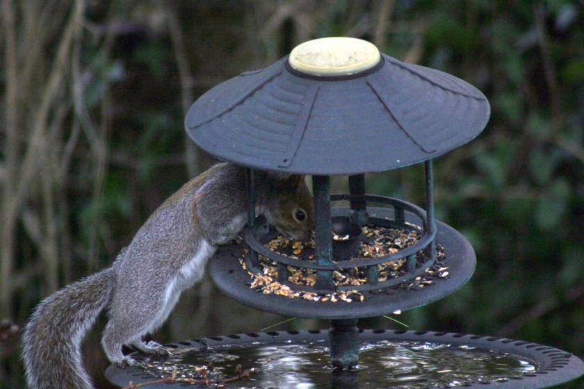Feed Thief