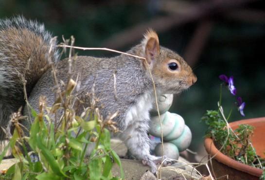 Squirrel - Who's a pretty boy then ?