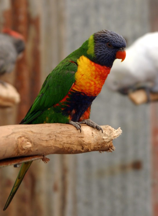 Bright_Parrot_IMG_9324