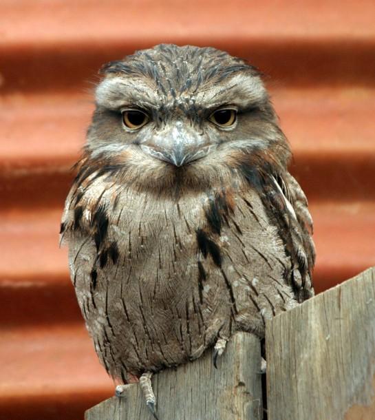 Owl_Crop_IMG_9335