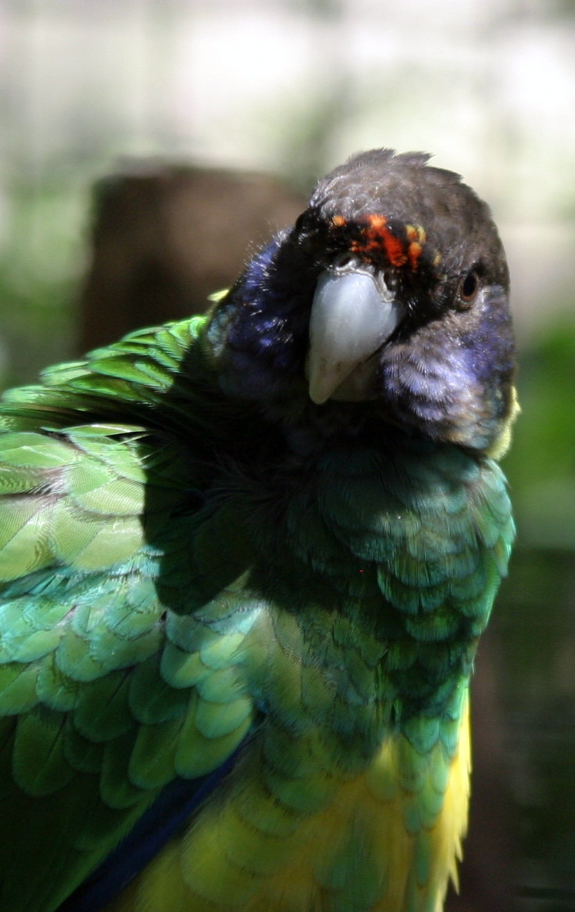 Parrot_Cropped_IMG_9302