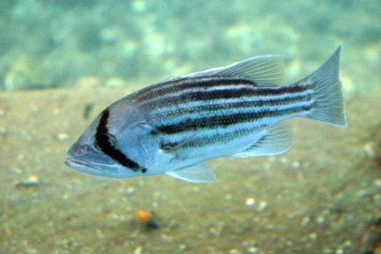 BJ_Fish