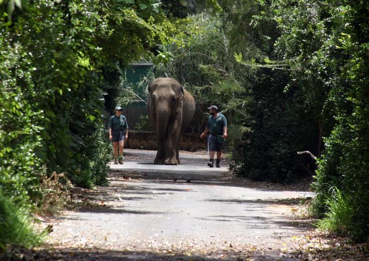 Perth Zoo - Tricia