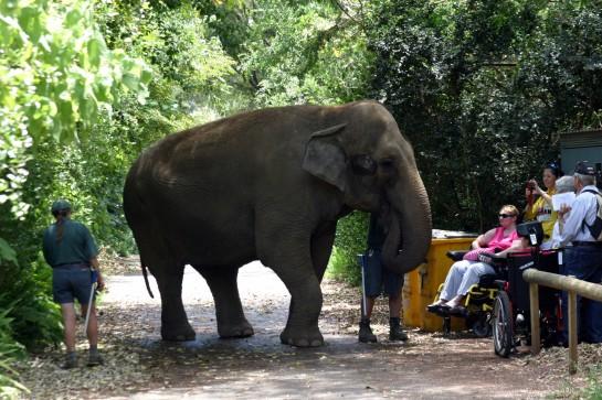 Perth Zoo - Tricia 2