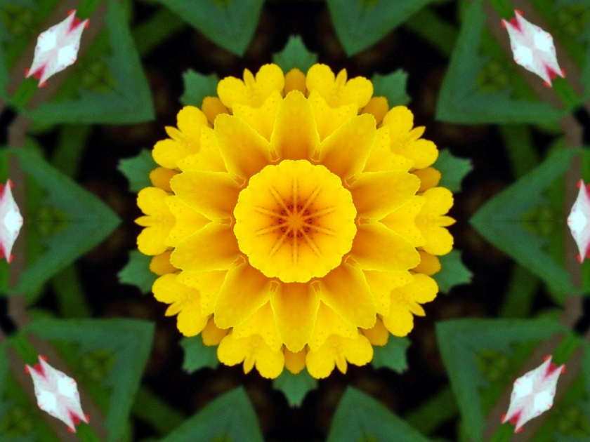 Marigold Kaleidoscoped