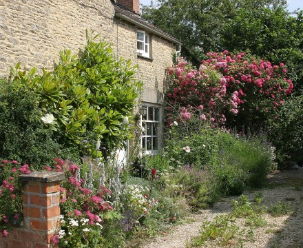 Bampton - Church View - A real cottage garden.
