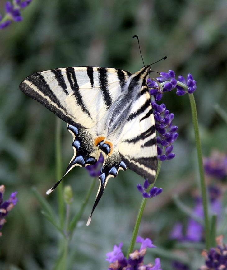Collonges-la-Rouge, France - It's that butterfly again.