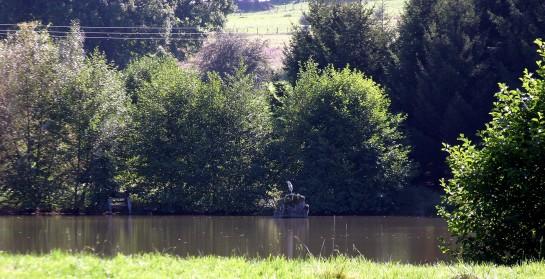 Heron - pond, La Porcherie, Limousin, France