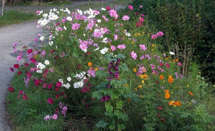Beautiful. A random roadside collection of flowers.