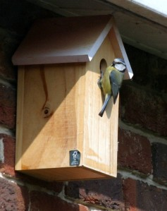 Our New Neighbour, Blue Tit