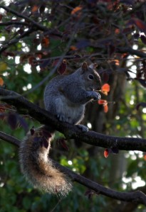 Squirrel2_IMG_2355