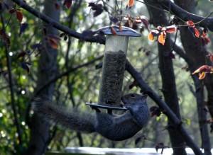Squirrel4_IMG_2355