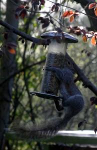 Squirrel5_IMG_2355