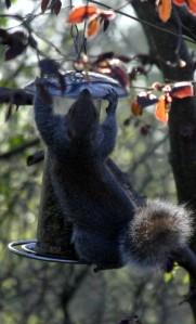 Squirrel6_IMG_2355