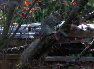 Squirrel7_IMG_2355