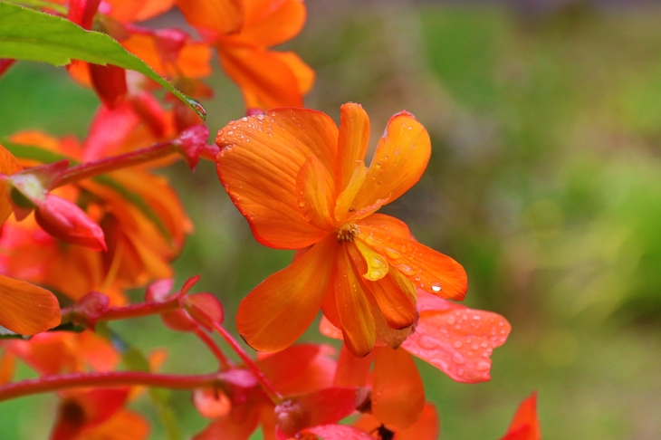 Orange Flower - Experimenting with my new Canon 7D Mk II