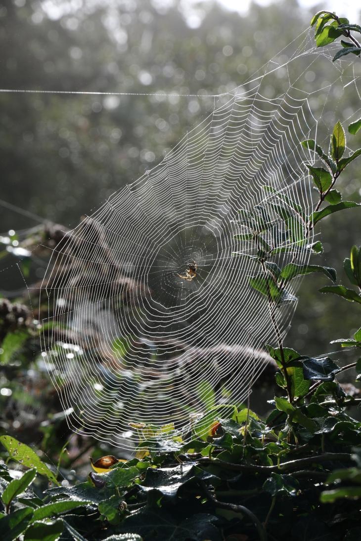 Cobweb & Spider