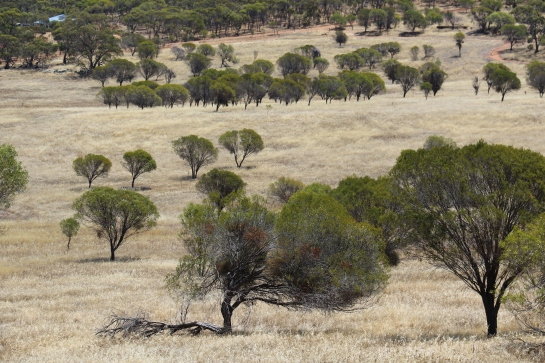 Countryside - Near Northam WA