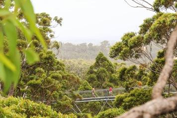 Treetop Walk - Valley of the Giants, WA