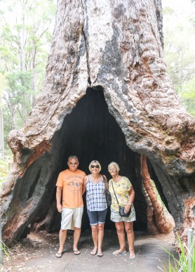 Our Motley Crew - Valley of the Giants, WA