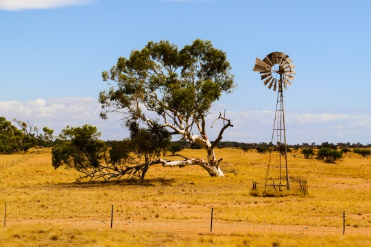 Tree and Pump near Wooramel River