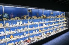 Hilda Hotker Shell Collection