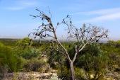 Tree - Kalbarri, WA