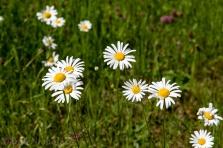 gite_daisy