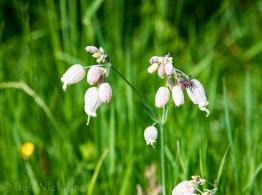 gite_flower