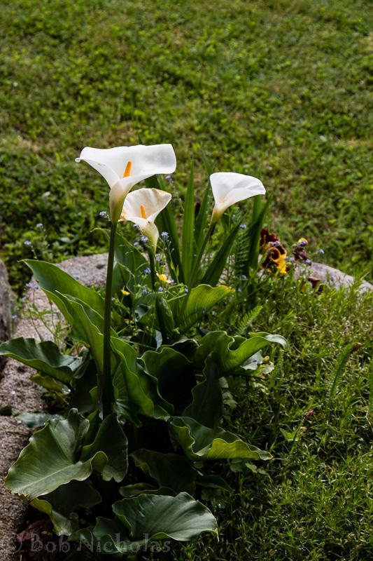 Gite_flowers