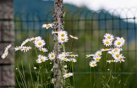 gite_flowers3