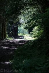 gite_forest