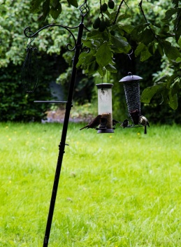 Bird Feeder - Erddig