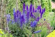Flower Bed - Erddig
