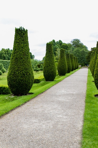 The Fastigiate Yew Avenue - Erddig