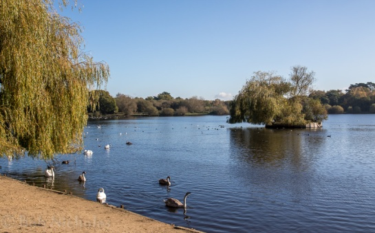 Petersfield Heath Lake
