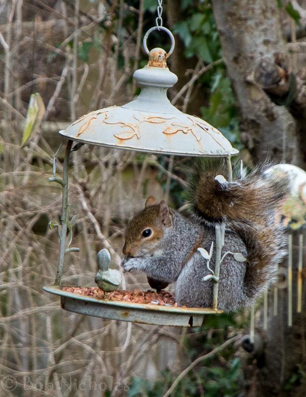 Squirrel_Feb2