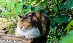 Sorrento - Cat on guard duty
