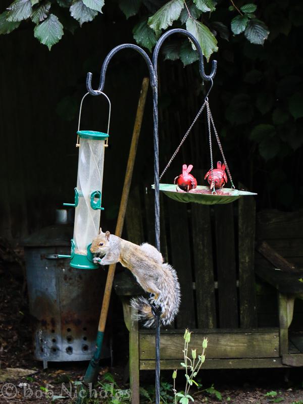 SquirrelFeeder1