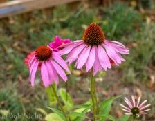 Flowers in Walled Garden