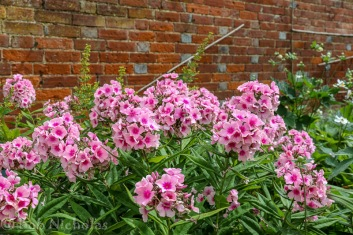 Flowers in Walled Garden