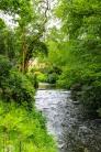 River Bollin - Quarry Bank