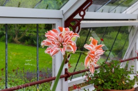 Glass House, Kitchen Garden - Quarry Bank Mill