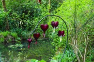 DICENTRA BLEEDING HEART