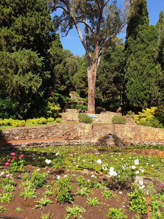 Araluen - Botanical Park - Grove of the Unforgotten