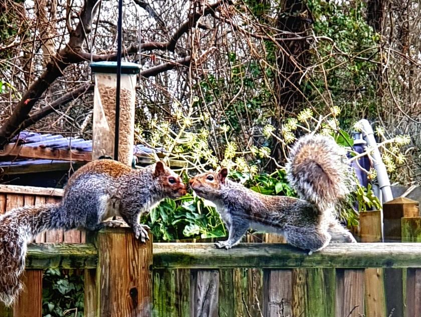 squirrels_cropped